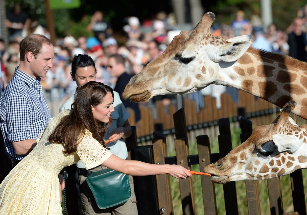 April-2014-Kate-William-fed-giraffes-Taronga-Zoo