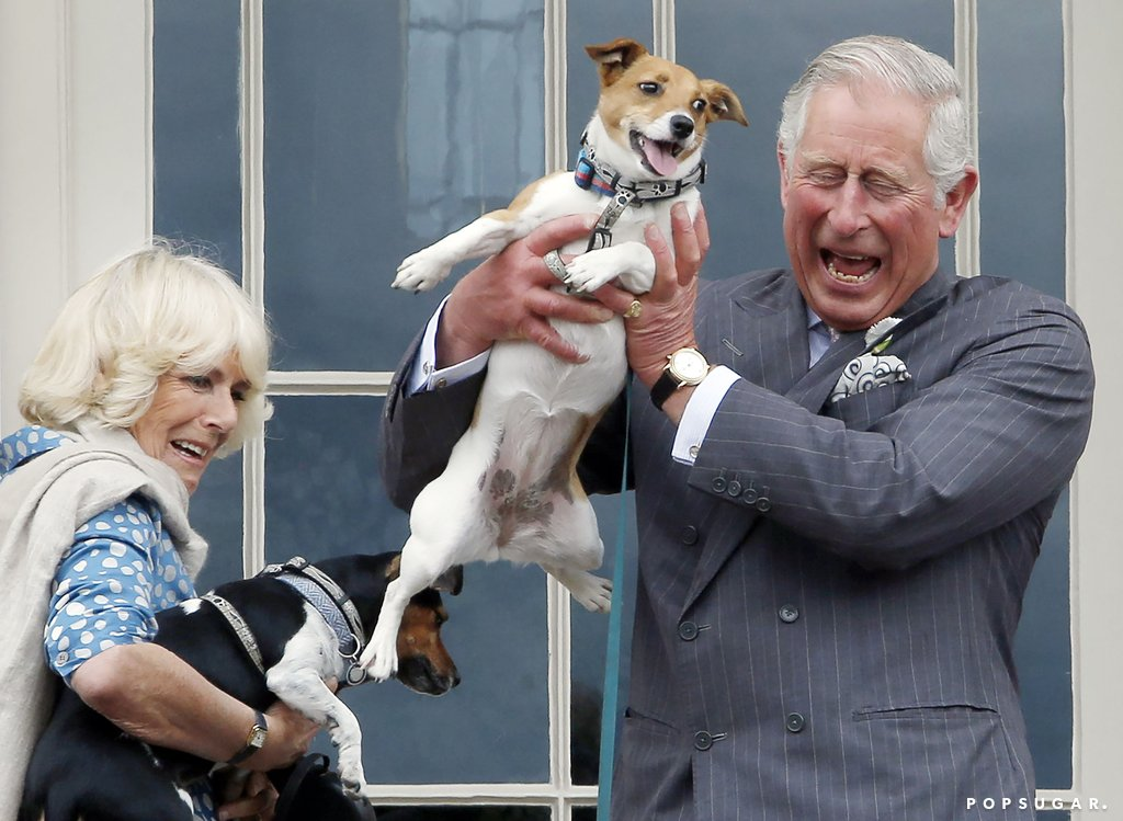 Charles-Camilla-held-barely-rescue-Jack-Russells