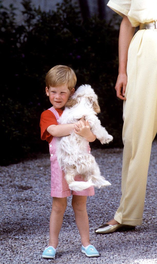 Harry-cuddled-King-Juan-Carlos-I-Spain-puppy-while-family