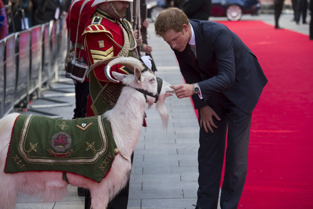 Harry-pet-goat-50th-anniversary-screening-his-favorite