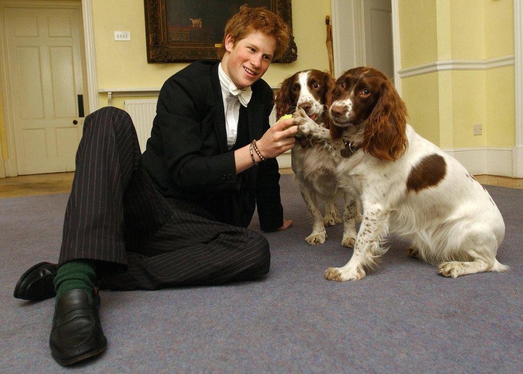 Harry-pet-his-house-masters-spaniels-Rosie-Jenny-Eton