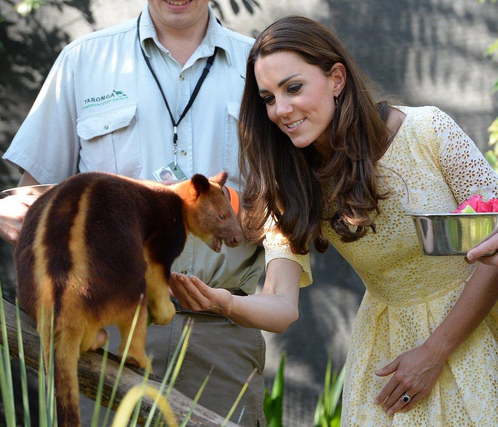 Kate-fed-tree-kangaroo-during-royal-couple-visit-Australia