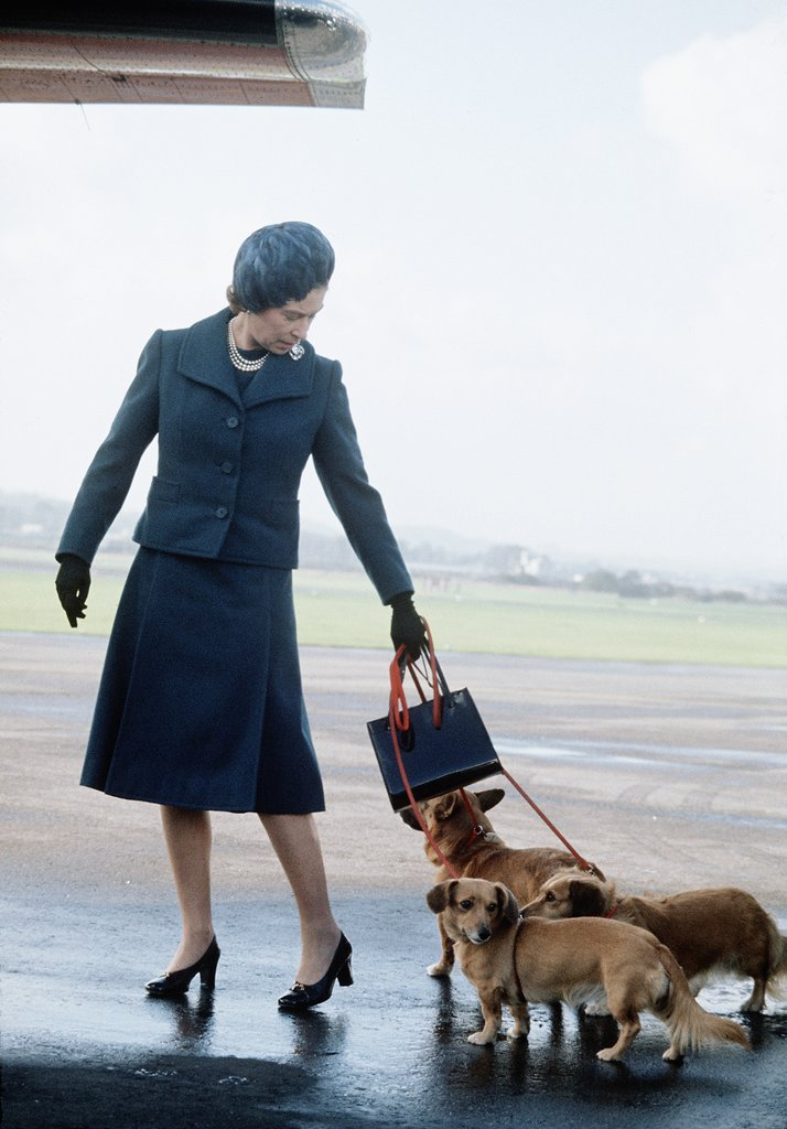 queen-never-far-from-her-beloved-Corgis-pictured-here