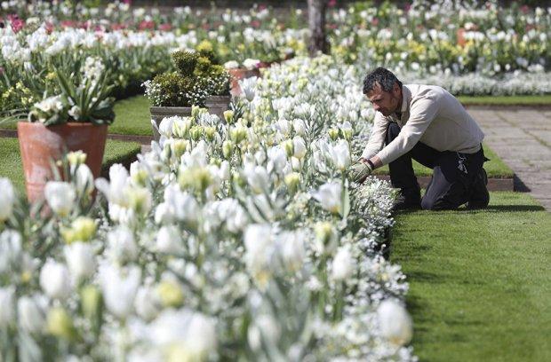 Кейт Миддлтон на прогулке в Белом саду в память леди Ди