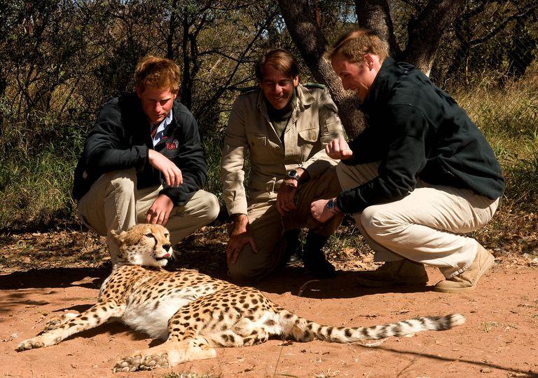 Принц Гарри спасает носорогов в Африке