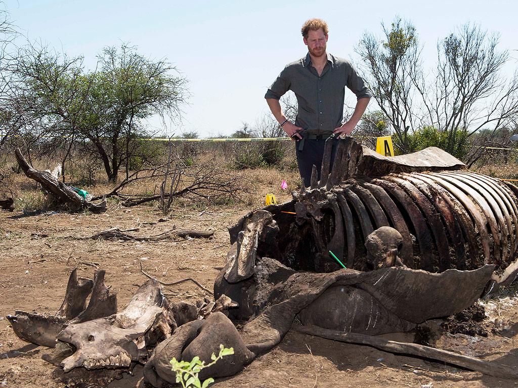 Принц Гарри собирается в Ботсвану без Меган Маркл