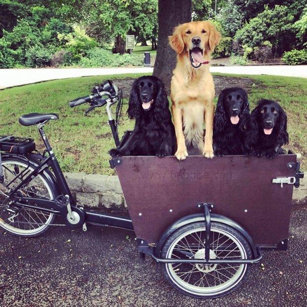 У брата Кейт Миддлтон воры угнали велосипед