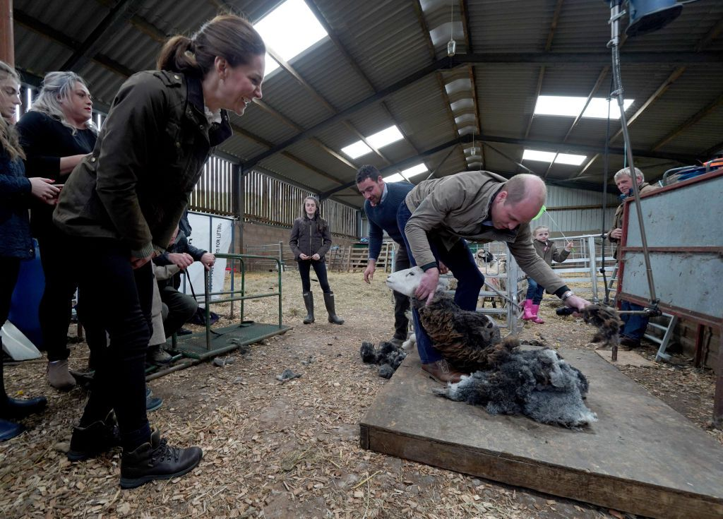 Принц Уильям и Кейт Миддлтон помогли фермерам стричь овец
