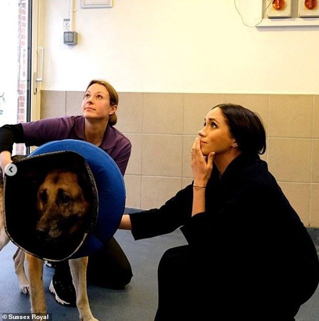 Меган Маркл побывала в приюте для животных перед отъездом в Канаду