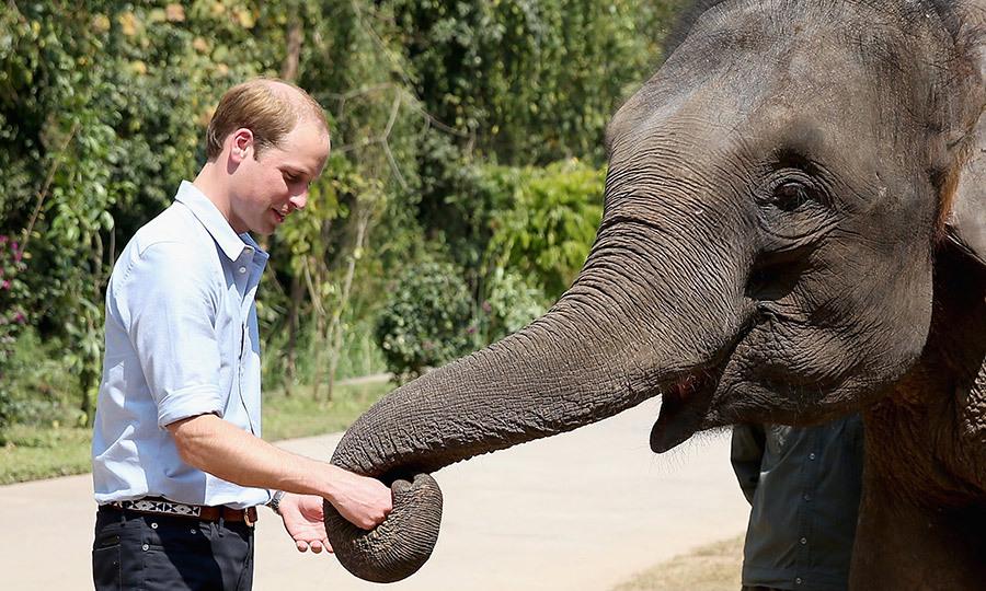 Принц Уильям выступает против торговли дикими животными
